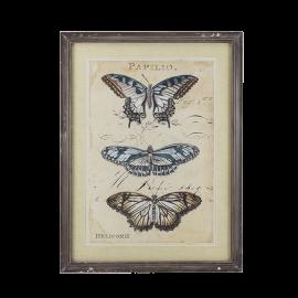 Obrázek motýl A