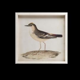 Obraz Ptáček A