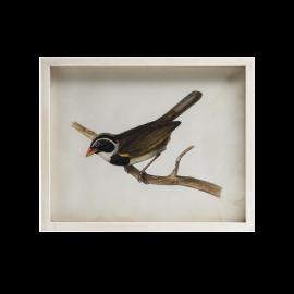 Obraz Ptáček B