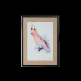 Obraz papoušek Kakadu II