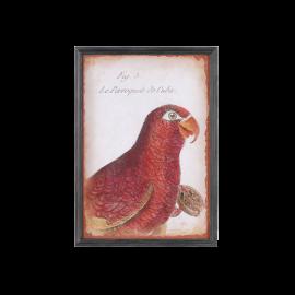Obraz papoušek červený
