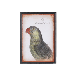 Obraz papoušek zelený
