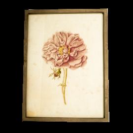 Obraz čajová růže