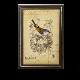 Obrázek Ptáček