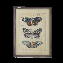 Obrázek motýl B