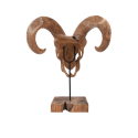 Dřevěná lebka buvola